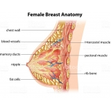 busco por médico especialista cancêr de mama Lapa