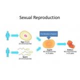 onde encontrar clínica especialista em reprodução humana Aclimação